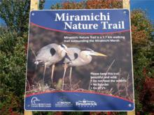 Miramichi Marsh Nature Trail (Chatham)