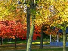 Elm Park, photo by Sharon Stewart