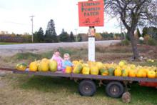 """I'll just sit here a while until I decide which 1, maybe 2 of these pumpkins I'll take home with me"""