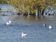 Seagulls enjoying the water