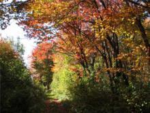 Colourful trail