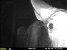 Moose Selfie