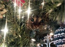 Christmas Kitty