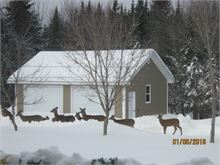 group of Deer