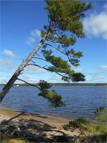 Beaubear's Island