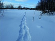Snowshoe Trail at Ducks Unlimited