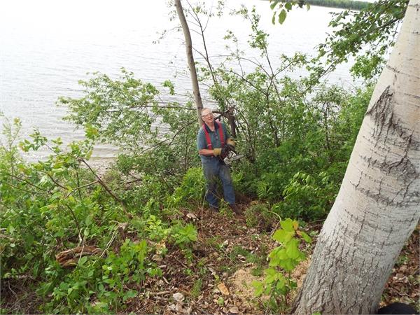 removing trees & stumps - free estimates